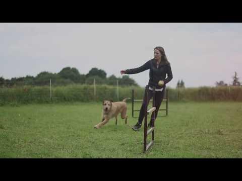 Amazing [Rescued] Dog Tricks - Kodi