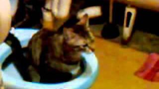 кот как человек ходит в туалет:)