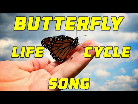 BUTTERFLY LIFE CYCLE SONG   Egg, Caterpillar, Chrysalis, Butterfly