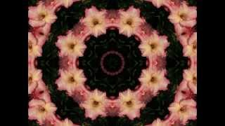 Astral Flowers