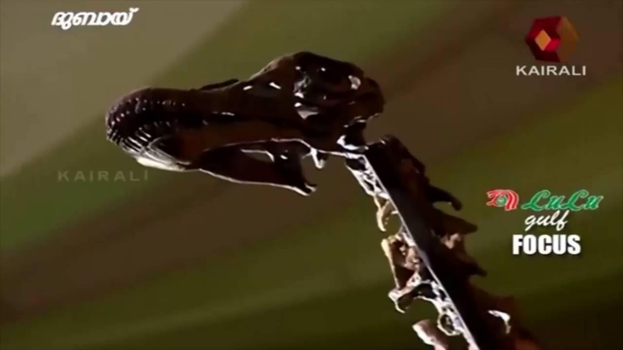Gulf Focus   155 million yr old dinosaur skeleton on display in Dubai