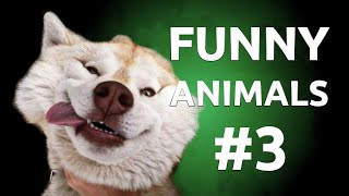New Best Funny Animals Compilation || FAILZONE || #3