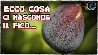 ECCO COSA CI NASCONDE IL FICO!
