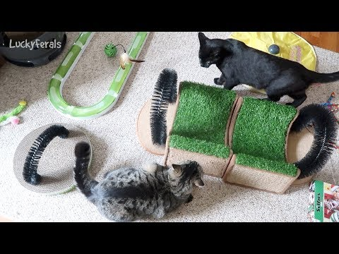 Boo Day 134 - Nice Boys Don't Jump On Other Cats - Training And Socializing A Feral Cat