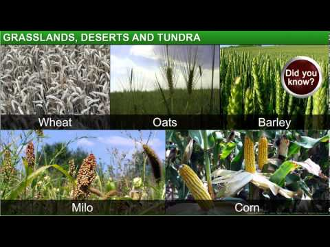 Geography_Class 7th_Chapter 6-Natural Vegetation and Wildlife_Module 3-Grassland, Desert and Tundra