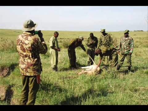 The Poisoning of Kenya's Lions