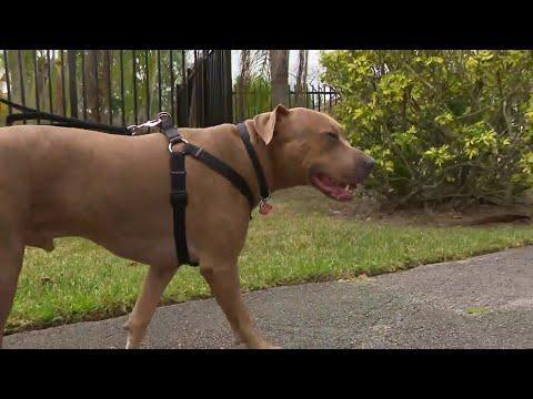 Community association says ex-Marine's emotional support dog is too big