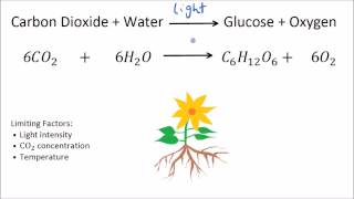 Rate of Photosynthesis - Limiting Factors | GCSE Science | Biology | Get To Know Science