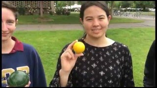 Bocce instructional video 2016