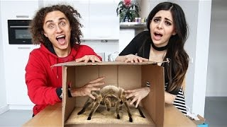 WE USED LIVING ANIMALS! (What's in the BOX Challenge)