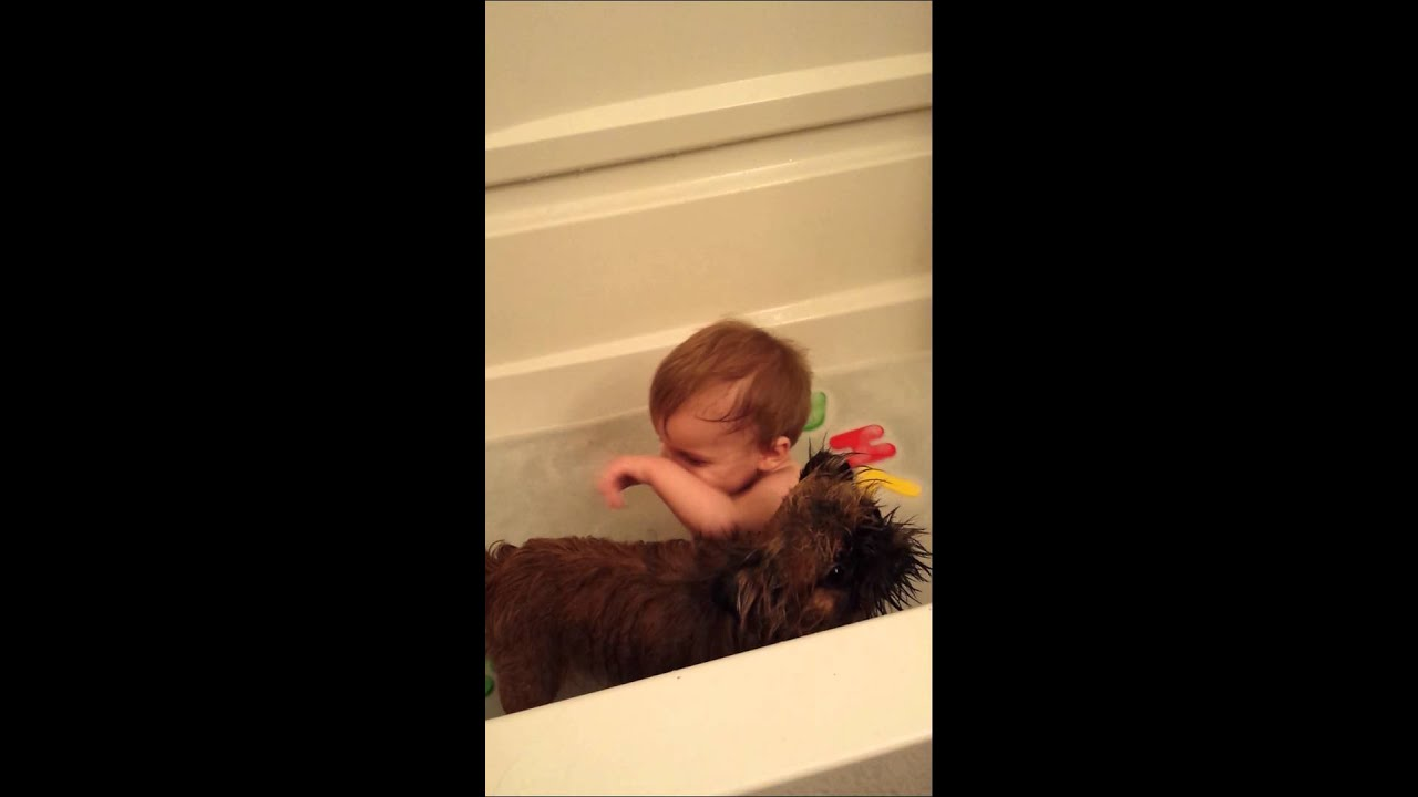 baby laughing at brussels griffon dog in bathtub youtube. Black Bedroom Furniture Sets. Home Design Ideas