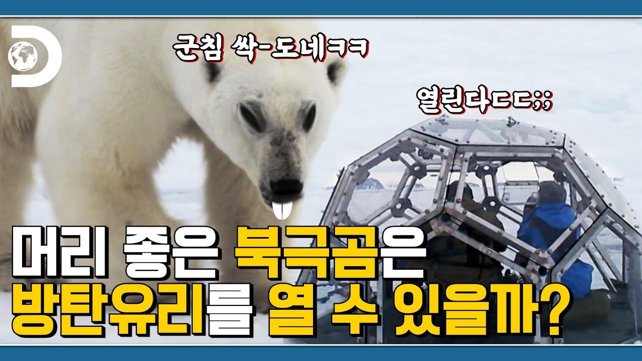 북극곰은 사람을 찢어😱 북극곰의 휴먼 언박싱🐻 [포식동물 관찰기]