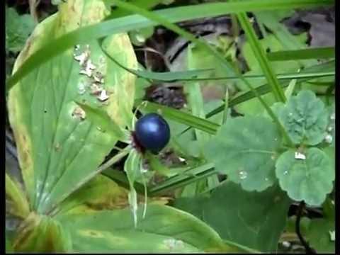 Ядовитые растения и грибы Вечные темы