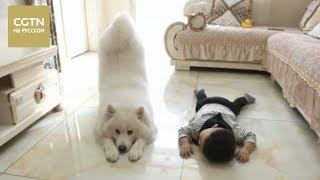 Мальчик из пров. Хэйлунцзян и его собака стали настоящими звездами китайского интернета