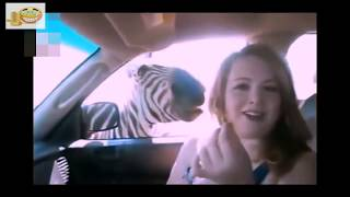 Download Stupid Humans vs Smart Wild Animals 6 Mp3 and Videos