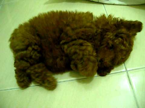 Dog or Teddy Bear? You Decide