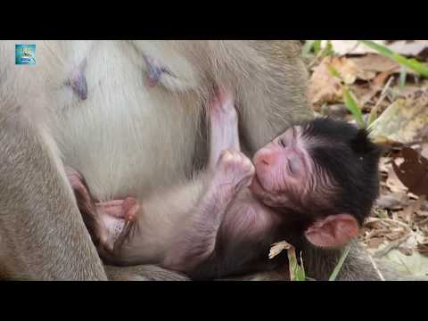 Hot news, monkey giving a birthday 2 days ago- Natural World part 71