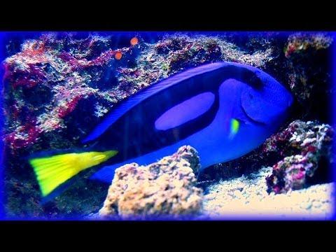 ❀ Southern Seas Relaxing Aquarium