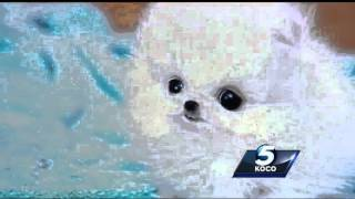 Woman Ripped By Online Dog Scammer