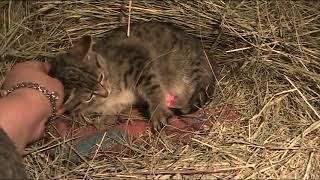 Дикий котенок стал ручным мурлыкой :) Индюшки резко пошли в рост.