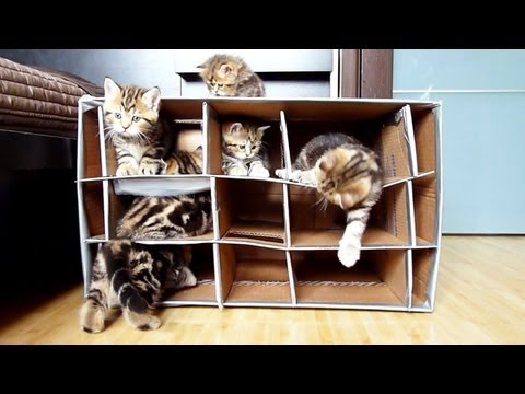 Funny and Cute Kittens playing with Handmade Fort