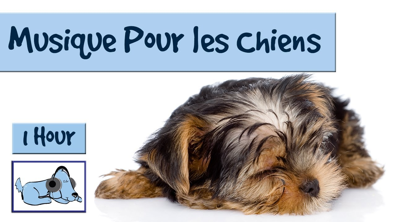 musique relaxation chien
