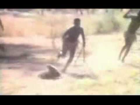 Monkey hunts wild boar - SINA English.flv