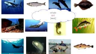 13  Обитатели моря 1