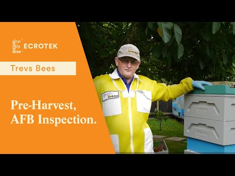 Trevs Bees - Pre-Harvest, American Foul Brood (AFB) Inspection.
