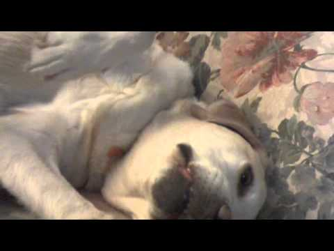 Sasha Argov's Lullaby