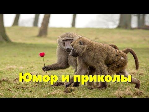 Черняков  - прикольные истории из жизни и