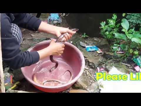 Eel Catch Clean Cook-Eel Fishing-Cute Girl Catch A lot of Eels