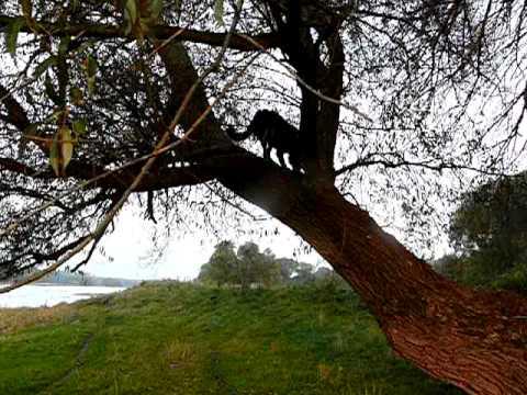 Auf Die Bäume Ihr Affen