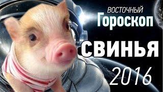 гороскоп свинья рыбы мужчина на 2016 год