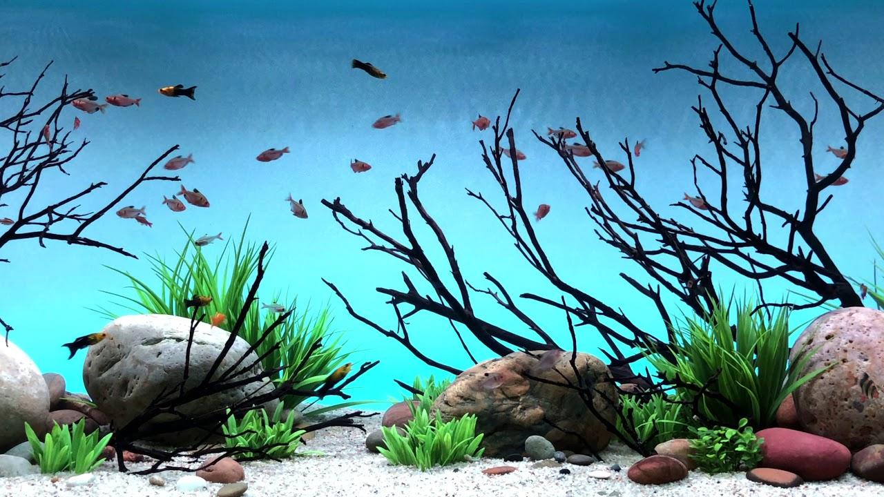 serene freshwater led kit with background light fading colors youtube