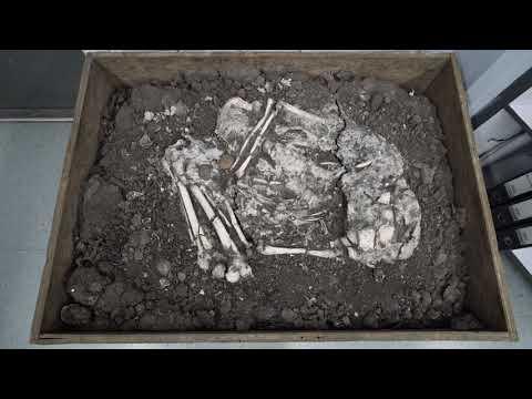 Banwari Trace Archaeological Site