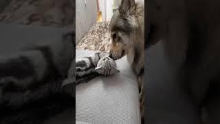 Вот как кошка с собакой. Больше видео, на канале. Подпишись! #shorts