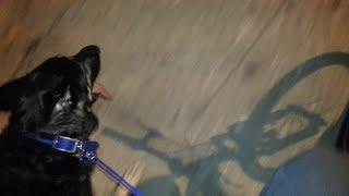 German Shepherd Running With Bike!