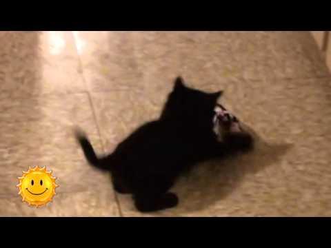 Черные кошки приносят удачу (24.11.15)