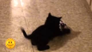 Download Черные кошки приносят удачу (24.11.15) Mp3 and Videos