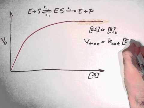 Biochemistry 9.3: Enzyme kinetics part 2