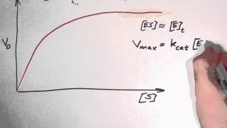 Biochemistry 9.3: Enzyme kinetics part 2
