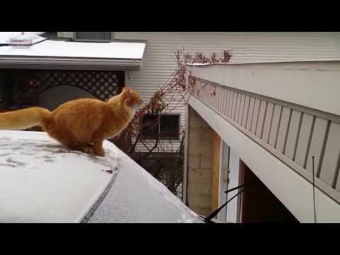 Jumping Cats: Epic Fail ))