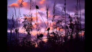 Украинская народная песня - Сiла птаха