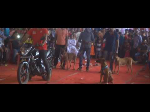 Dog Show at pala | kottayam, Kerala