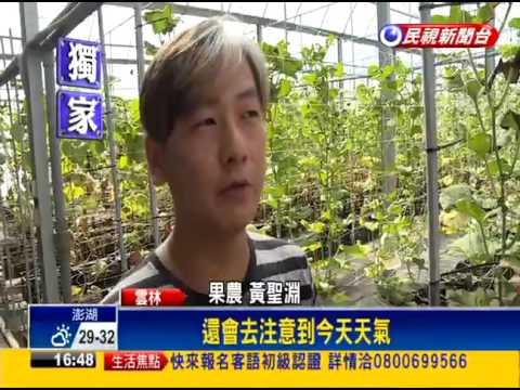 高材生勇闖有機農業種出每顆千元哈密瓜-民視新聞