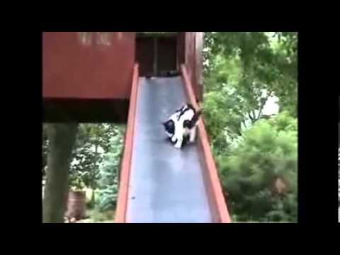 Funny Cats Video - Cats Pictures