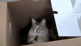 Jarrod and the box