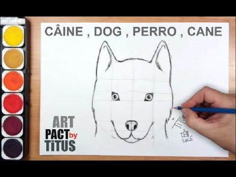 Cum Sa Desenezi Un Caine How To Draw A Dog Husky