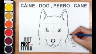 Cum Sa Desenezi Un Caine How To Draw A Dog Husky Youtube